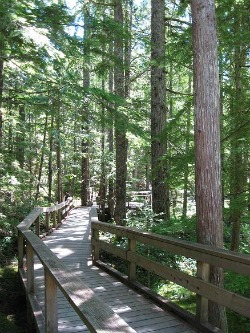 Walking the boardwalk at the Trail of Two Forests.  Photo: KGilb.