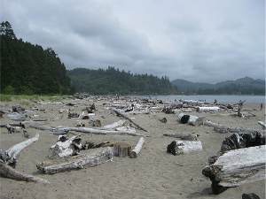 Driftwood litters the sand at Taft Beach. Central Oregon Coast. Photo: KGilb.