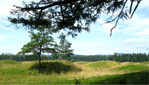 Mima Mounds as seen from edge of forest. Photo: KGilb.